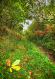 Woodland Path Royalty Free Stock Photos