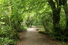 Woodland Path Stock Image