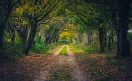 Woodland path through trees in autumn Royalty Free Stock Image