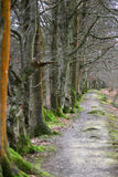 Woodland path. Winter woodland path surrounded but moss and bracken Stock Photos
