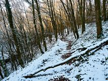 Woodland Path in Winter Wales UK. Above Capel Betws Lleucu in Wales is an ancient path cut into the side of a valley though woodland unspoilt since the last ice Stock Image