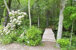 Woodland Path Royalty Free Stock Photo