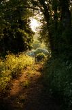 Woodland Pathway. Leading to gate, sunsetting Stock Photos