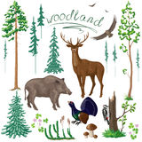 Woodland Plants and Animals Set Stock Photos