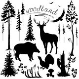 Woodland plants and animals set Stock Photos