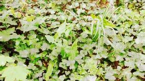 Random undergrowth 3 stock photography