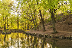 Woodland Pond Background Royalty Free Stock Images