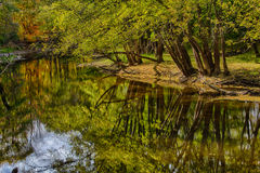 Woodland Reflections. Lush foliage and trees reflected in waters of Ryerson Woods Royalty Free Stock Photos