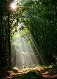 Woodland road and sunbeams Royalty Free Stock Images