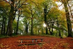 Free Woodland Scene Royalty Free Stock Photos - 51016438