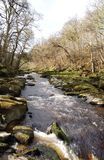 The woodland Scene Stock Image