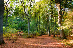 Woodland scene in autumn fall. Royalty Free Stock Photos