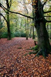 Autumn woodland Royalty Free Stock Photography