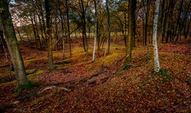 Woodland scene in the forest royalty free stock photography