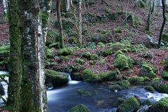 Woodland scene with a river moss and lots of lichen Royalty Free Stock Photography