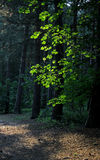 Woodland scene with shadow and pathway Royalty Free Stock Photo