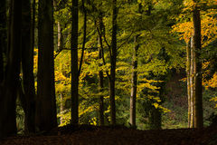 Woodland Scene Stock Photography