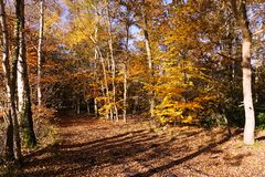 Woodland scene. Tree's in this mixed woodland during autumn royalty free stock photos