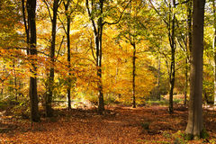 Woodland scene with yellow and brown autumn leaves royalty free stock image