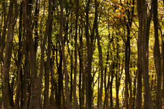 Woodland scene with yellow and brown autumn leaves stock photos