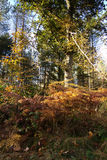 Woodland scene with yellow and brown autumn leaves Stock Photography