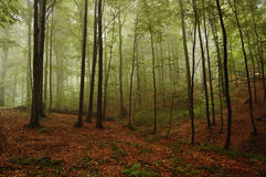 Free Woodland Scenery Stock Photos - 16913503