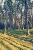 Woodland Scenery Royalty Free Stock Images