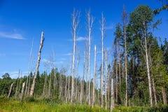 Woodland scenery stock photography