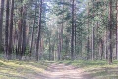Woodland scenery stock image