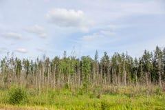 Woodland scenery royalty free stock photos