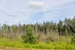 Woodland scenery stock images
