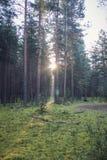 Woodland scenery royalty free stock photography