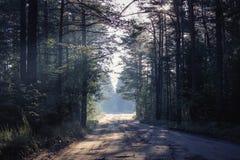 Woodland scenery royalty free stock photo