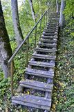 Woodland scenery with a stair at autumn Royalty Free Stock Image