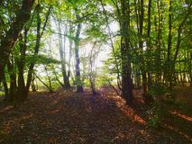 Afternoons woodland shadows 2 royalty free stock image