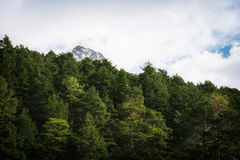 Woodland and snow capped mountain range Stock Images