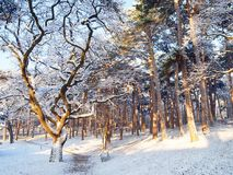 Woodland during Snow at Daytime Royalty Free Stock Photos