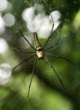 Woodland Spider Stock Photos