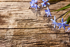 Woodland spring flowers. On wood background Stock Photos