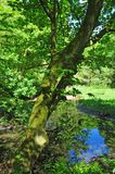 Woodland spring scene with vibrant green trees overhanging a calm blue pond and vibrant green foliage in bright sunlight stock images