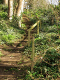 Woodland Stairway Stock Photography