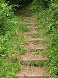 Woodland Steps. Naturalised steps in a rural woodland setting Stock Photo
