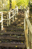 Woodland Steps Royalty Free Stock Photos