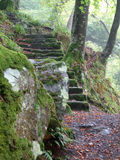Woodland Steps. In Northumberland, England Royalty Free Stock Photography