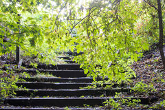 Woodland Steps Stock Image
