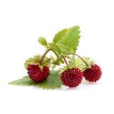 Woodland strawberries Royalty Free Stock Image