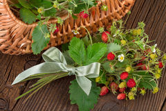 Woodland strawberries on wooden background Stock Photography