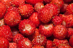 Woodland Strawberry Stock Image