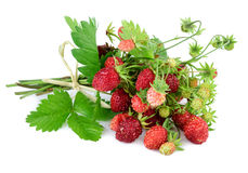 Woodland strawberry with leaves on white. Stock Photos