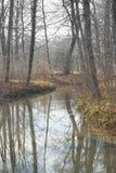 Woodland and Stream Royalty Free Stock Photos